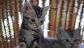 สัตว์,สัตว์ต่างๆ,แมว 42383049