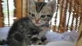 동물, 고양이, 새끼 42383053