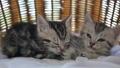 동물, 고양이, 새끼 42383156