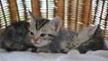 สัตว์,สัตว์ต่างๆ,แมว 42383157