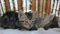 동물, 고양이, 새끼 42383158