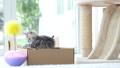สัตว์,สัตว์ต่างๆ,แมว 42383281
