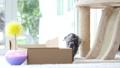 สัตว์,สัตว์ต่างๆ,แมว 42383282