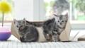 สัตว์,สัตว์ต่างๆ,แมว 42383287