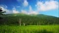雲から現れる至仏山 42419462
