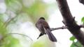 นก,ดูนก,สัตว์ 42438606