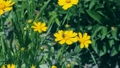 Bees flying over the field of yellow flowers and 42441339