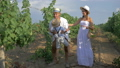 vintner picking organic grapes, happy family in straw hats with basket for fresh fruits walk among 42452355
