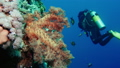 cave diving underwater scuba divers exploring cave dive. Red Sea Egypt 42476732