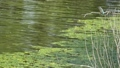 물총새가 화면의 오른쪽 지점에서 왼쪽으로 날아 장면의 슬로우 모션 42479192