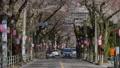 ดอกซากุระบาน,ซากุระบาน,ฤดูใบไม้ผลิ 42501367