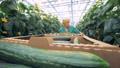 woman, greenhouse, boxes 42557102
