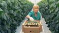woman, cucumber, pick 42557387