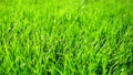 Background of bright green grass 42569214