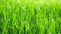 Background of bright green grass 42569216