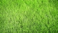 Background of bright green grass 42569218