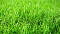 Background of bright green grass 42569222