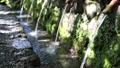 湧水 清流 湧玉池 (奥から手前へピン送り) 42648985