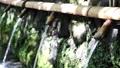 湧水 清流 湧玉池 (奥から手前へピン送り) 42648986