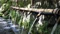 湧水 清流 湧玉池 (奥から手前へピン送り) 42648990