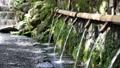 湧水 清流 湧玉池 42648992