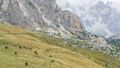 Grazing horse on a mountain pass, Dolomites, Italy 42650320