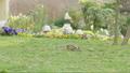 青草 草地 草 42714844