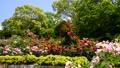 春の広見公園-6047979 42740216