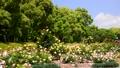 春の広見公園-6048005 42740222