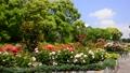 春の広見公園-6048013 42740223