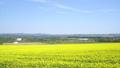 일면의 유채 꽃 (홋카이도 안평 빵 촬영) 42744887