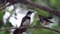 นก,กิ่งไม้,เกาะคอน 42792561