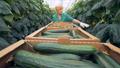farm, greenhouse, gardener 42795804
