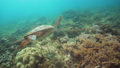 乌龟 海龟 水下 42904044