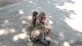 ここは高崎山と言う山です、 ここでは、野性猿が食べ物を食べるために、餌場に集まります、 42925928