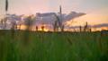 sunset, field, grass 42948637