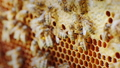 bee, bees, hive 43023790