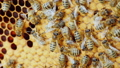 bee, bees, hive 43023792