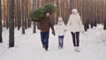 family, tree, forest 43159459