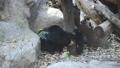熊 動物 動物園 43174334