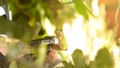 개구리 개구리 청개구리 정원 환경 에코 eco 녹색 식물 생물 양서류 수도꼭지 수돗물 43175558