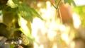 개구리 개구리 청개구리 정원 환경 에코 eco 녹색 식물 생물 양서류 수도꼭지 수돗물 43175559
