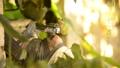 개구리 개구리 청개구리 정원 환경 에코 eco 녹색 식물 생물 양서류 수도꼭지 수돗물 43175560