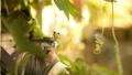 개구리 개구리 청개구리 정원 환경 에코 eco 녹색 식물 생물 양서류 수도꼭지 수돗물 43175561