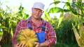 vegetable, farmer, harvest 43262598