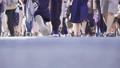 渋谷スクランブル交差点を歩く人々の足元_スロー 43301113