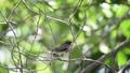 นก,สัตว์,สัตว์ต่างๆ 43308729