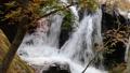 秋の山鶏滝・やまどりたき(福島県・平田村) 43315035