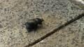 动物 甲壳虫 虫子 43397816