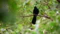 Bird (Asian koel) on tree in nature wild 43461345